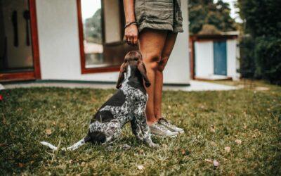 3 simple kommandoer din hund skal kunne