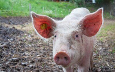 Hvorfor skal man gå op i dyre-velfærd?