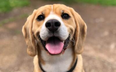 Totteland – alt det bedste til dit kæledyr!